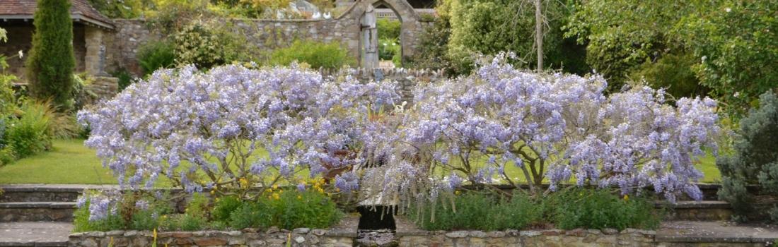 Burrow-Farm-Gardens-Visit-Devon-Holiday-South-west-Axminster-2-Copy-1100x350