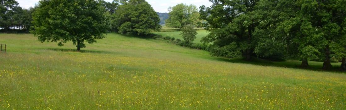 Burrow-Farm-Gardens-Visit-Devon-Holiday-South-west-Axminster-81-1100x350