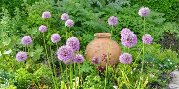 Burrow-Farm-Gardens-1-Rose-Garden-Medium-600x300