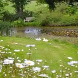 Burrow-Farm-Gardens-10-Pond-or-wildlife-Medium-1024x681
