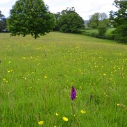 Burrow-Farm-Gardens-11-wild-flower-meadow-Medium-1024x681