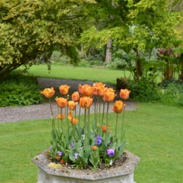 Burrow-Farm-Gardens-15-Medium-681x1024