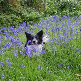 Burrow-Farm-Gardens-17-Woodland-Dog-Medium-1024x681