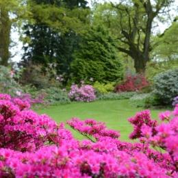 Burrow-Farm-Gardens-6-Woodland-Medium-1024x681