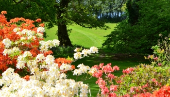 Burrow-Farm-Gardens-Visit-Devon-Holiday-South-west-Axminster-21-Copy-350x200