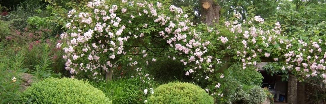 Burrow-Farm-Gardens-Visit-Devon-Holiday-South-west-Axminster-5-Copy-1100x350