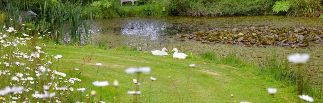 Burrow-Farm-Gardens-Devon-Visit-Coach-3-1100x350